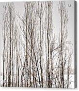 Foggy Winter Tree Fence 13271 Acrylic Print