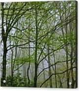 Foggy Woods Acrylic Print