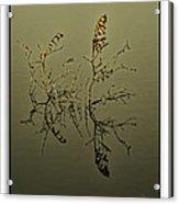 Fogy Reflection Acrylic Print
