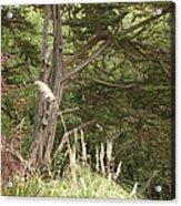 Foliage Art Acrylic Print