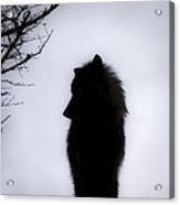 Wolf Folklore Acrylic Print