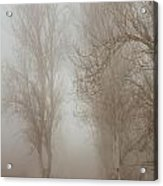 Follow It And Know Your Forests Acrylic Print