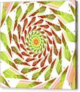 Abstract Swirls  Acrylic Print