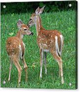 Fond Fawns Acrylic Print by Charles Warren