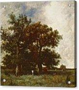 Fontainebleau Oak Acrylic Print