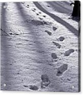Foot Steps In The Snow In A Forest  In Denmark Acrylic Print