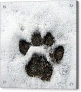 Footprint Series. Cat Acrylic Print