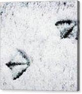 Footprints In The Snow Acrylic Print