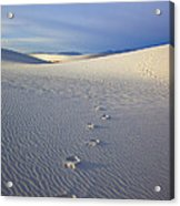 Footprints Acrylic Print by Mike  Dawson