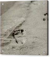 Footprints On The Beach Acrylic Print