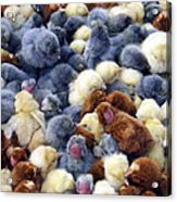 For Sale Baby Chicks Acrylic Print