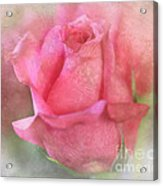 For The Love Of Pink Acrylic Print