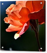 For You Dear  Acrylic Print