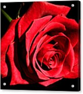 For You My Love Acrylic Print