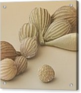 Foraminifera, Sem Acrylic Print by Power And Syred