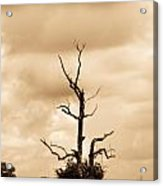Foreboding Clouds Over Ghost Tree 1 Acrylic Print