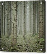 Forest #1 Acrylic Print