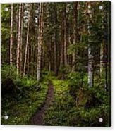 Forest Alder Path Acrylic Print by Mike Reid