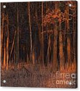 Forest At Sunset Acrylic Print