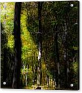 Forest Bench Acrylic Print