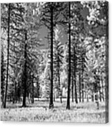 Forest Black And White Acrylic Print