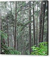 Forest Bluff Acrylic Print