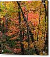 Forest Blush Acrylic Print