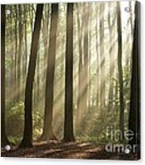 Forest Acrylic Print by Boon Mee