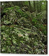 Forest Boulder Field Acrylic Print