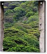 Forest Canopy Through The Window Of The Ruins Acrylic Print