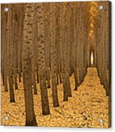 Forest Cathedral - One Acrylic Print
