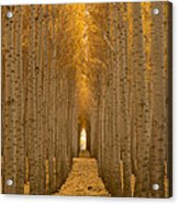 Forest Cathedral - Two Acrylic Print