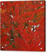 Forest Colors Of Fall Acrylic Print by Donald Torgerson