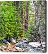 Forest Creek 2 Acrylic Print