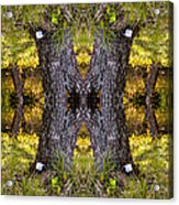 Forest Disaster C Acrylic Print
