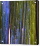 Forest Dreams Acrylic Print