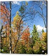 Forest Edge Autumn Pocono Mountains Pennsylvania Acrylic Print