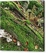 Forest Floor Fungi And Moss Acrylic Print