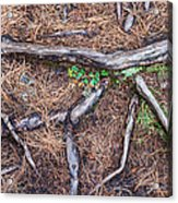 Forest Floor With Tree Roots Acrylic Print