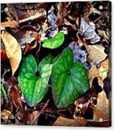Forest Flora Acrylic Print