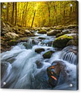 Forest Flow Acrylic Print