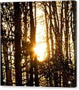 Forest Flurry Lightscape  Acrylic Print