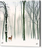 Forest Friend Acrylic Print