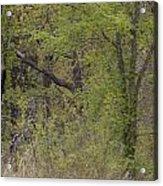 Forest Glimpse Acrylic Print
