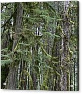 Forest Green  Acrylic Print by Tim Rice