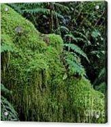 Forest Greenery Acrylic Print