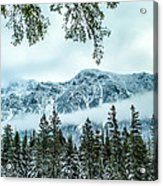 Forest Guardian Acrylic Print