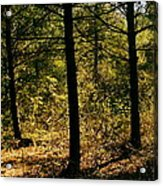 Forest Hike Acrylic Print