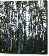 Forest II Acrylic Print