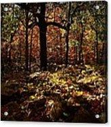 Forest Illuminated Acrylic Print